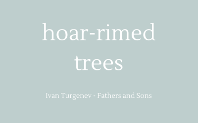 Hoar-rimed trees
