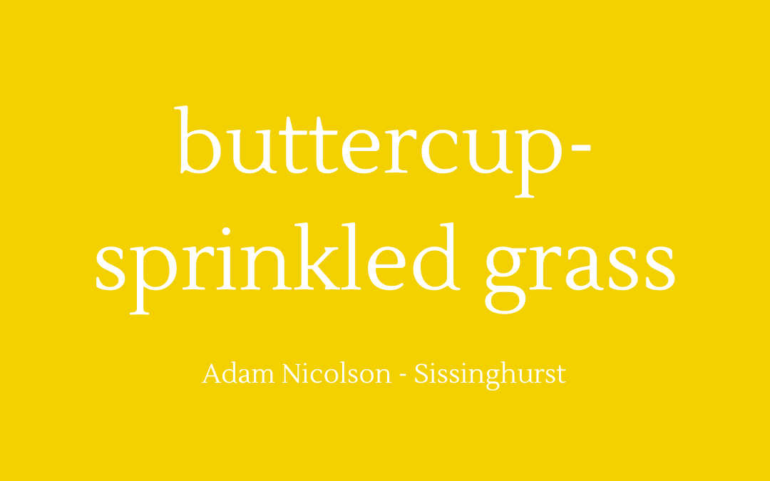 Buttercup-sprinkled grass