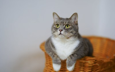 100 Brilliant Names For Your Cat: Male And Female