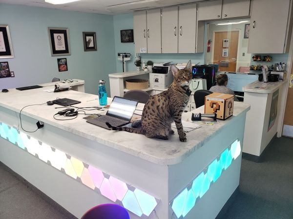 Therapy cat Phoenix at the reception for the LGBT+ friendly medical clinic