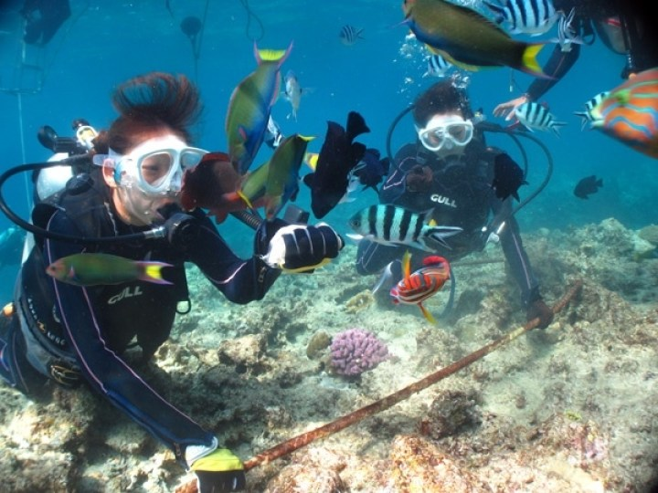 photo by 【通年開催】 《ブセナ海の中をゆったり楽しむ!》 ボート体験ダイビング (沖縄県・名護)|そとあそび