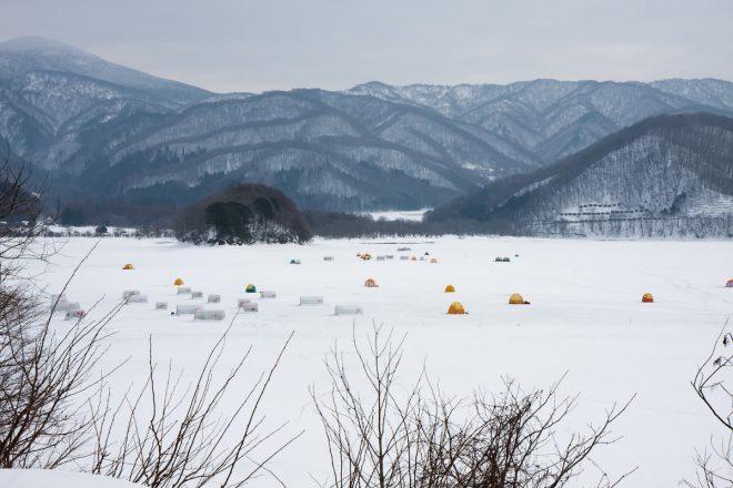 photo by 武蔵野のお散歩カメラマン