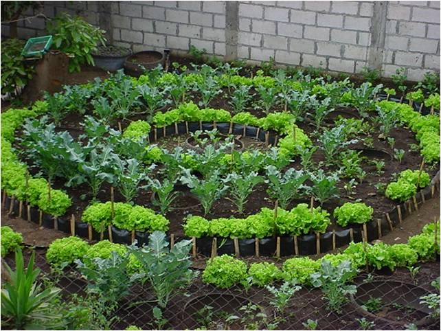 Building Mandala Garden