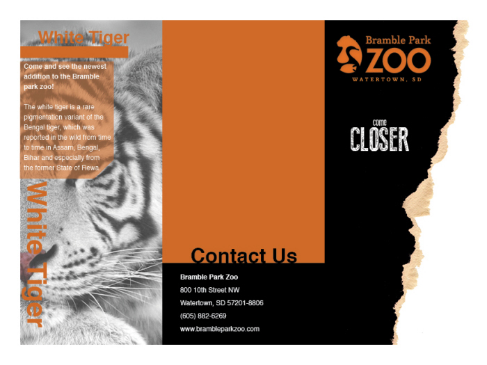 Zoo Brochure Design By Carolyn Cino At