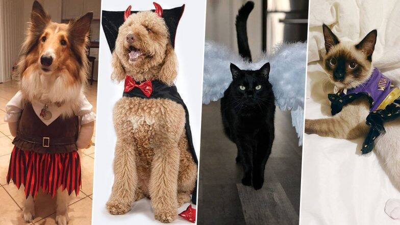 Whether halloween has sneaked up on you this year or you've been planning how to dress up your pet since last halloween, these adorable pet halloween costumes add so much fun to the spooky season. Halloween 2020 Costume Ideas For Dogs And Cats Pics And Videos To Dress Up Your Pets On Spooky Day Zee5 News