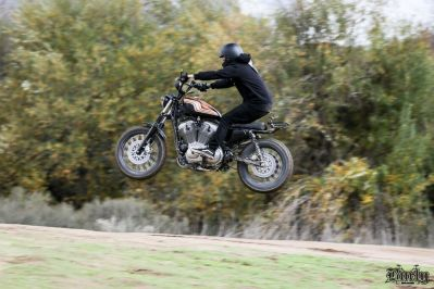 When Pigs Fly | The Burly Brand Sportster Scrambler