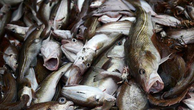 """fish-china-eat""""width =""""648""""height =""""369""""关于这个问题的最全面的和数据密集型的研究。</p data-recalc-dims="""