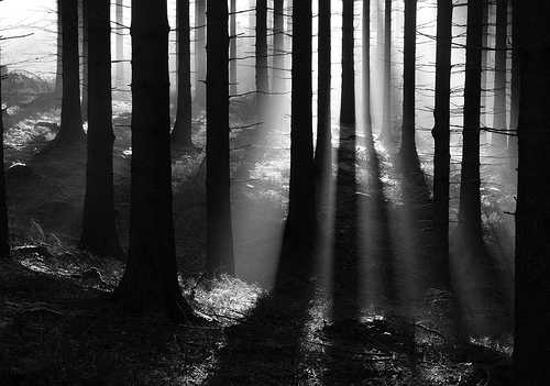 https://i1.wp.com/s4.favim.com/orig/50/beautiful-black-and-white-forest-light-nature-Favim.com-449162.jpg