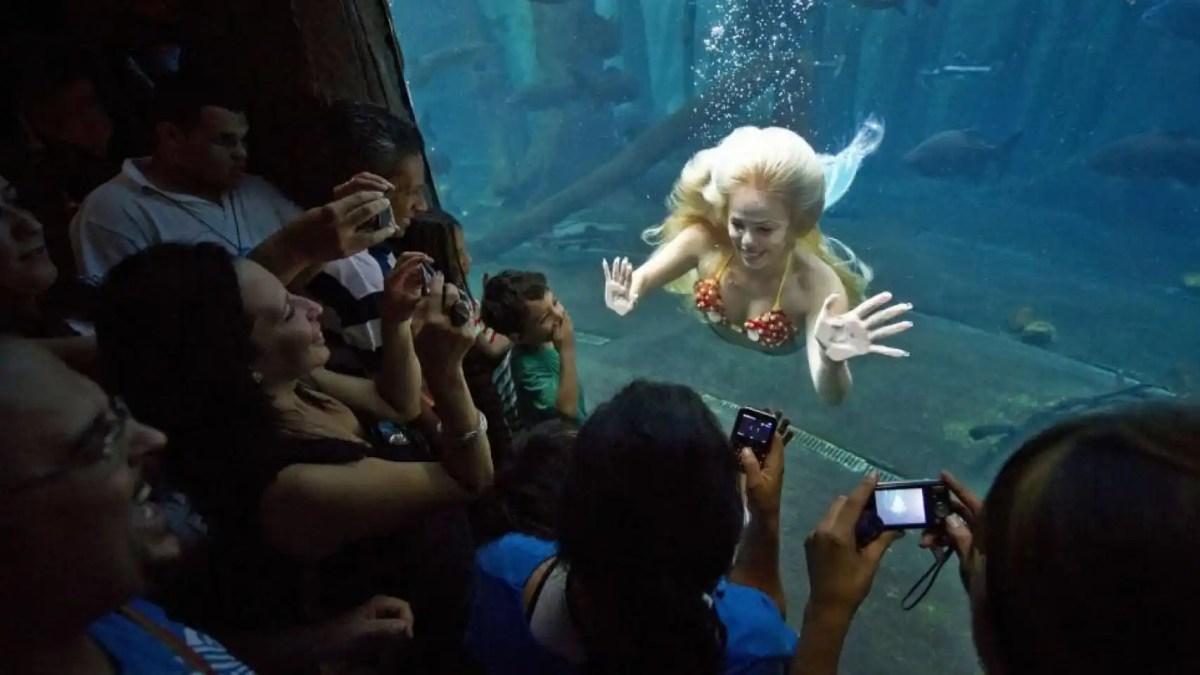 Mirella ofrece espectáculos, nada entre animales marinos mientras sus fans la observan.
