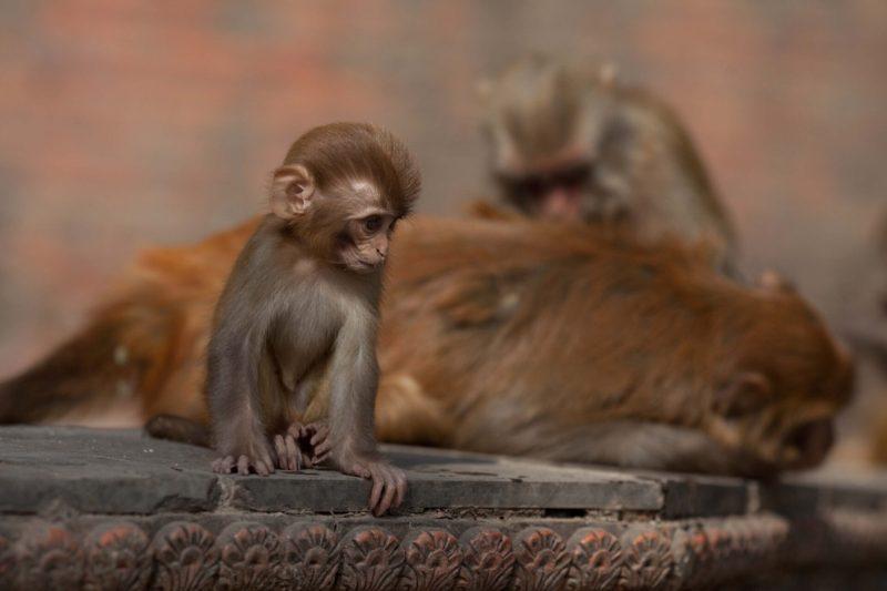 Обезьяний храм, достопримечательности Катманду