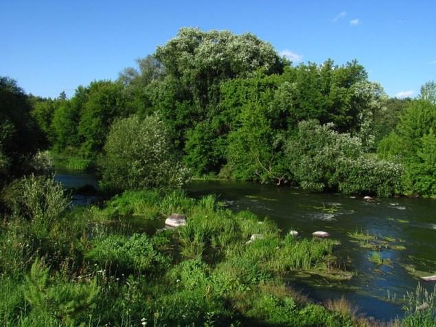 Річка Тетерів у районі Коростишева. Користувач:Gekatomba (2012).