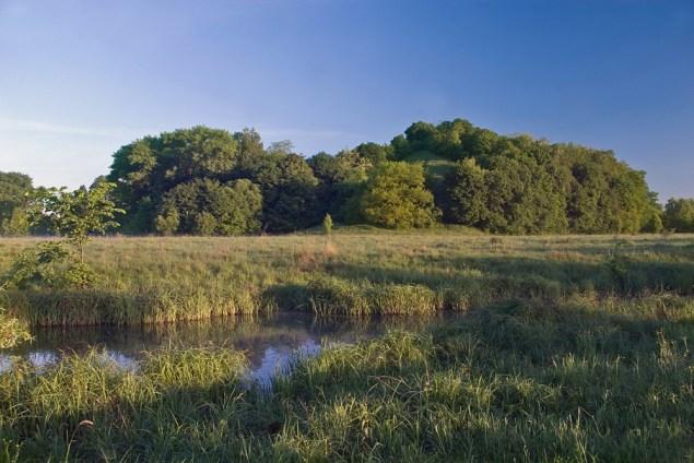 Ботанічна пам'ятка природи Данчичева гора