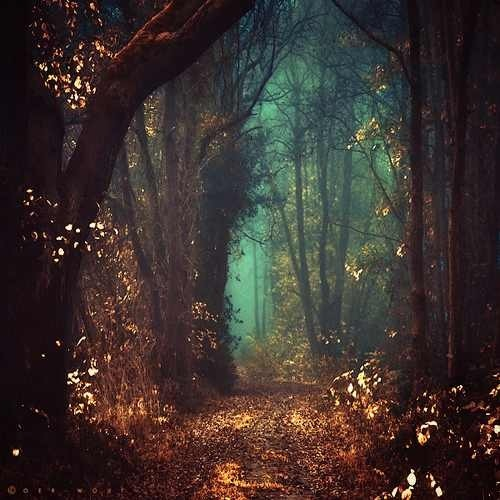 y magical forest image 1196774 by korshun on favim com