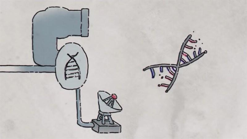 Видео: Почему летучие мыши не боятся заболеть гриппом