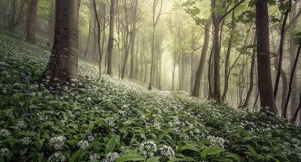 Фото дня: весенний лес в Великобритании