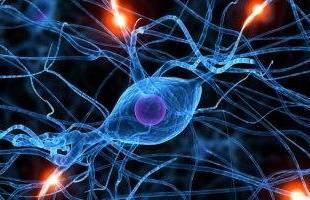 باحثون يطلقون مشروعا يساعد على رسم خريطة لخلايا جسم الإنسان