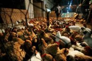 Researchers discover H5N8 strain of bird flu in Hong Kong for 1st time