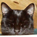 Black cat with eyes closed