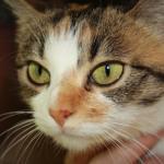 Beautiful cat looking ahead