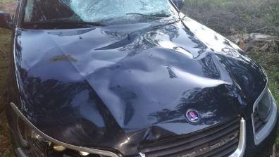 Capo de Saab 9-5 después del accidente