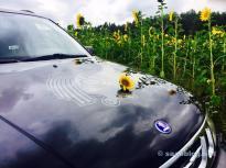 Sunflower meets troll.