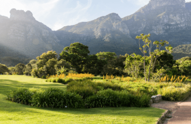 Kirstenbosch through the lens of an N8