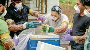 Nipah virus infection what is its Symptoms