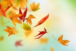 Autumn-Fall-Leaves-HD-Wallpaper