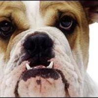Prutsen aan honden