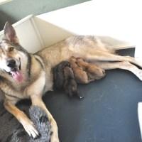 Lica's pups