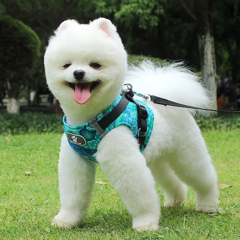 harness vest with leash