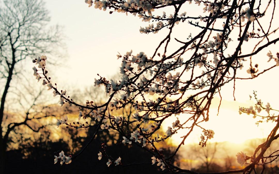 Dark Spring.