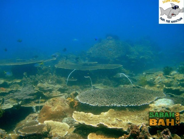 Just some of the reefs you can explore while diving with Scuba Junkie KK