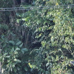 Book Zip Borneo's Flying Fox and Other Activities