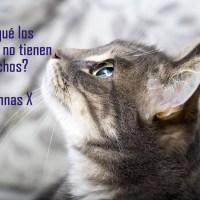 ¿Por qué los Animales no tienen Derechos? ^ Columnas X.