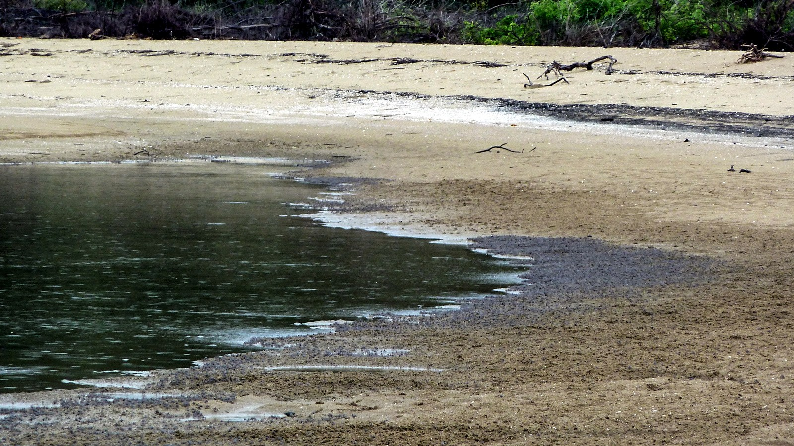 a photo of soldier crabs on the beach of hinchinbrook island.