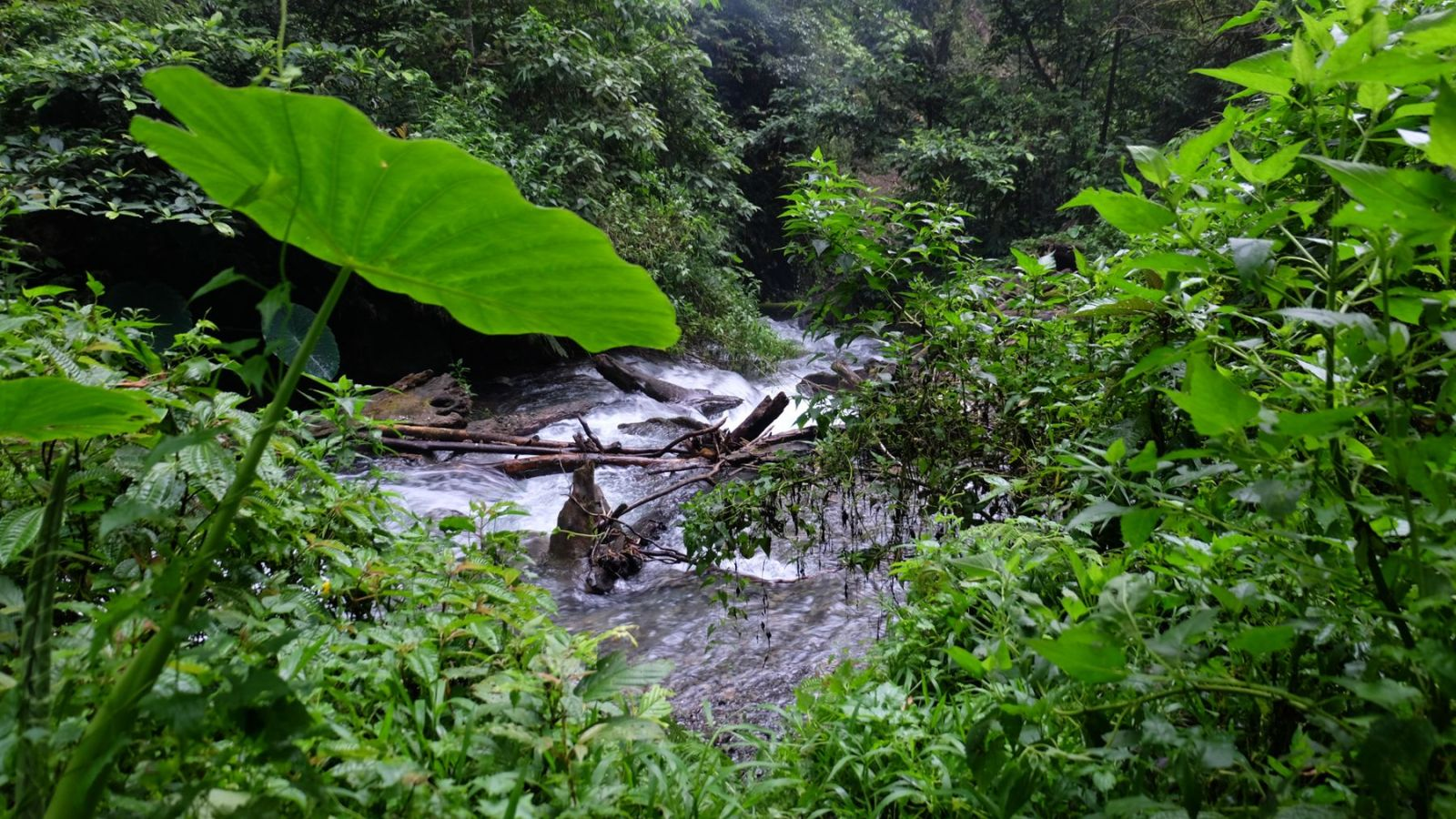 photo of a river in the rainforest of gunung leuser national park