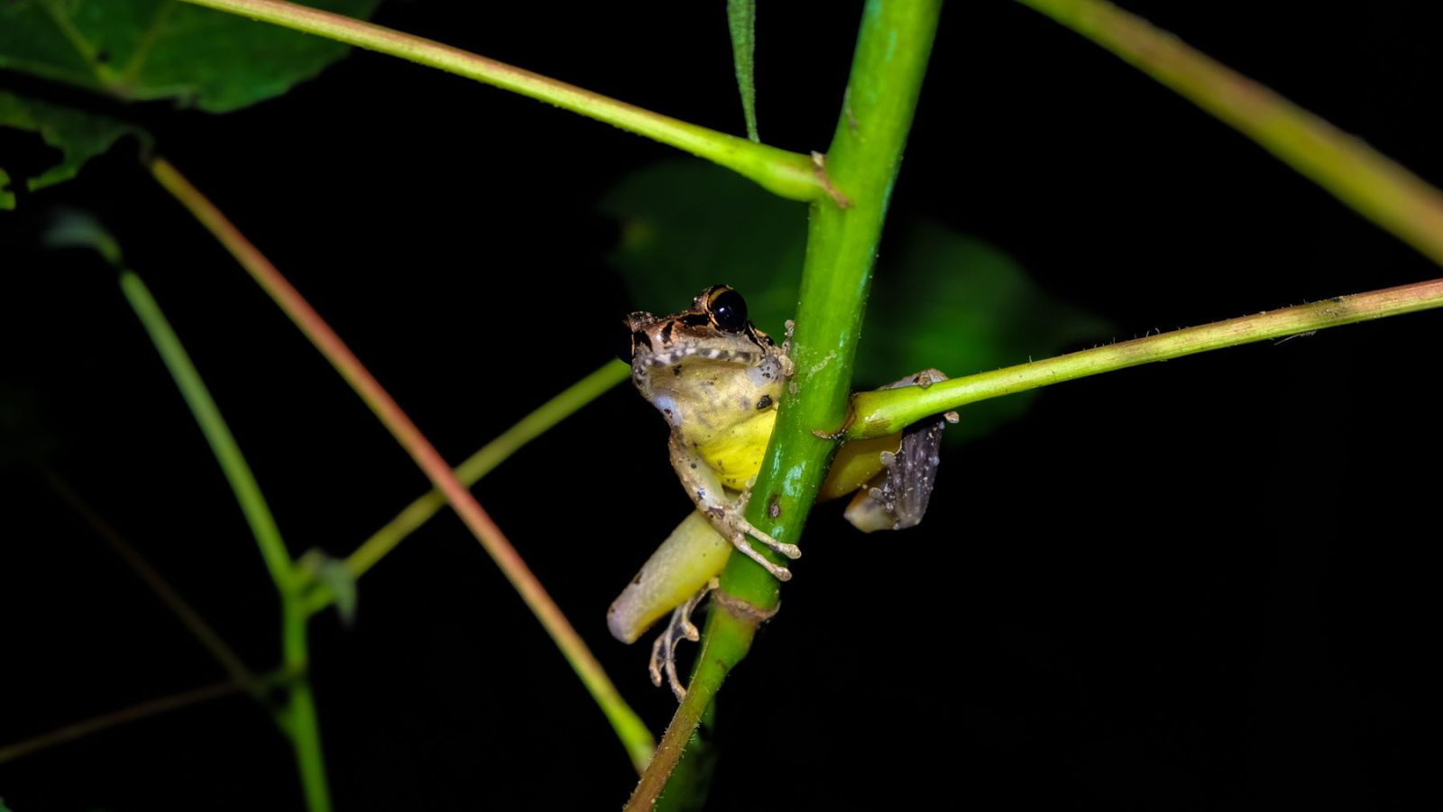 macro photo of a frog at night in gunung leuser national park