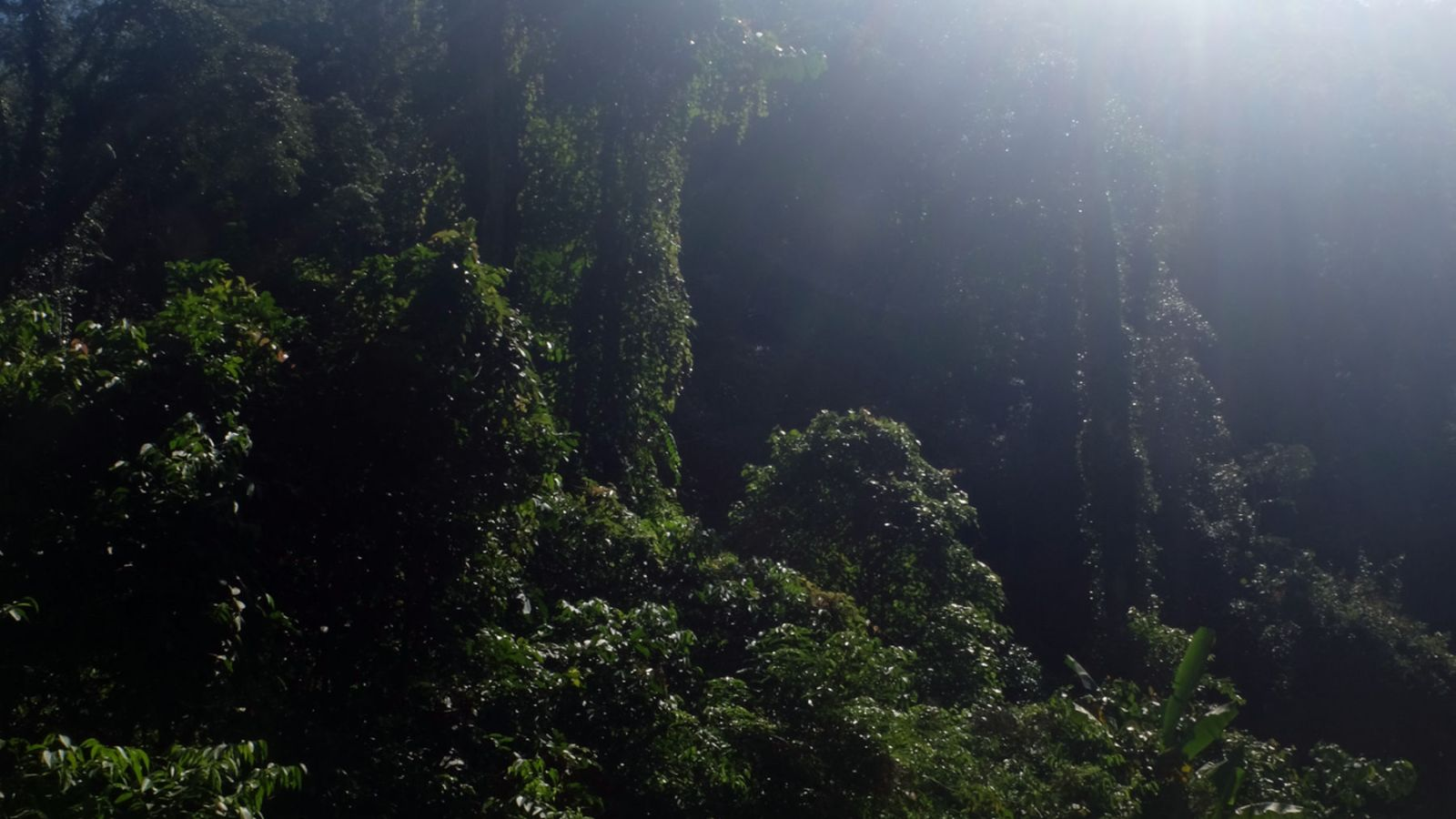 a photo of the rainforest in gunung leuser national park.