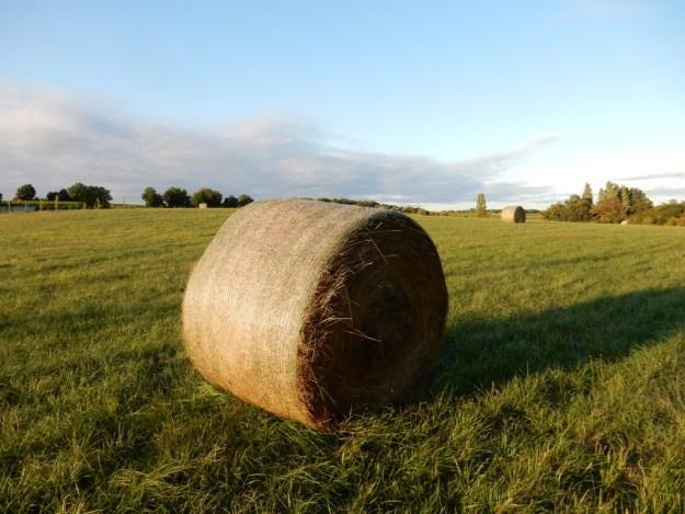 Rolled bales of hay  (Saint-Quentin-de-Caplong)