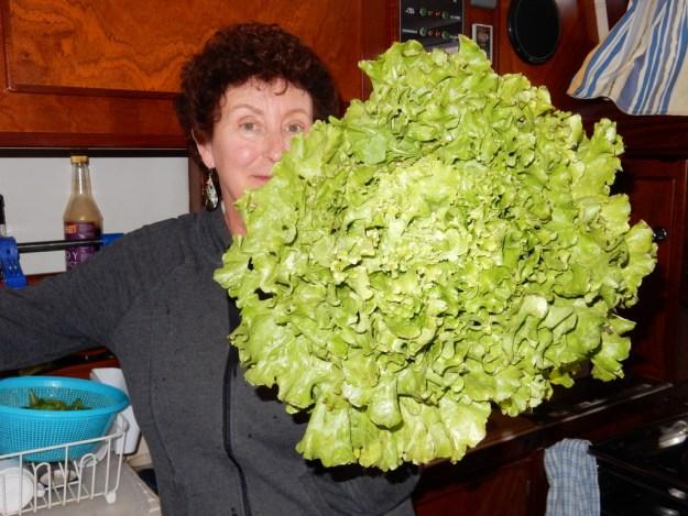Lettuce from the market in Güllük