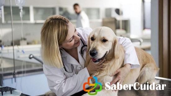Perro con el veterinario