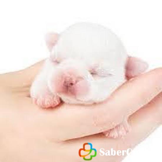 Perros pequeños en una mano