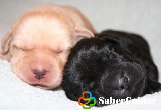 Perros pequeños recién nacidos con ojos cerrados
