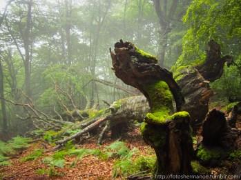 """""""Al olmo viejo, hendido por el rayo y en su mitad podrido, con las lluvias de abril y el sol de mayo algunas hojas verdes le han salido. """" Machado"""