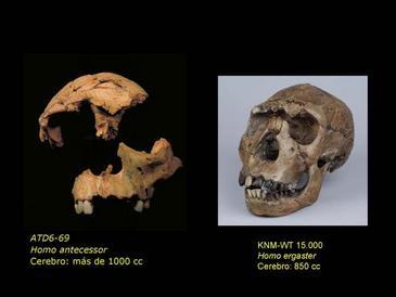 La cara de los humanos modernos apareció hace al menos un millón de años