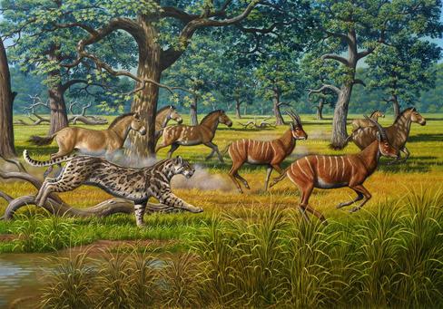 Los tigres dientes de sable formaban parte de la fauna de Batallón. / Mauricio Anton (CSIC)