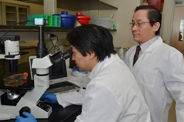 Xiaofang Wang, de la empresa ImStem Biotechnology, sentado, y a su lado Ren-He Xu. (Foto: Tina Encarnacion / UConn Health)