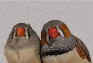 Las aves muestran picos de diferente intensidad.