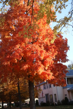 Fall Color.7232
